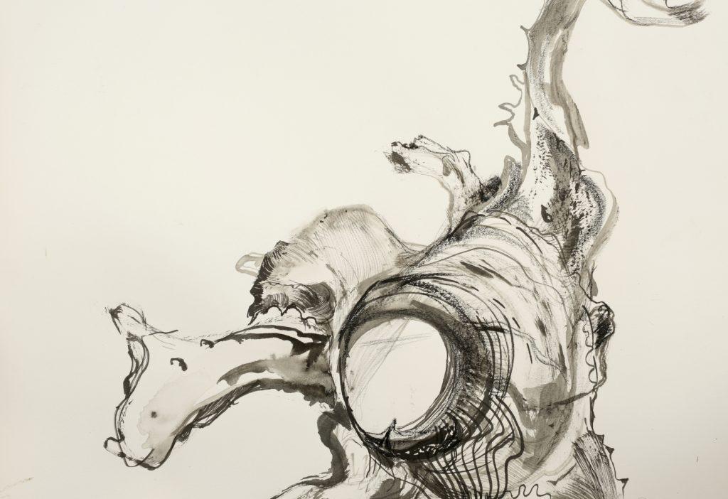 Ink drawing of an aloe vera husk
