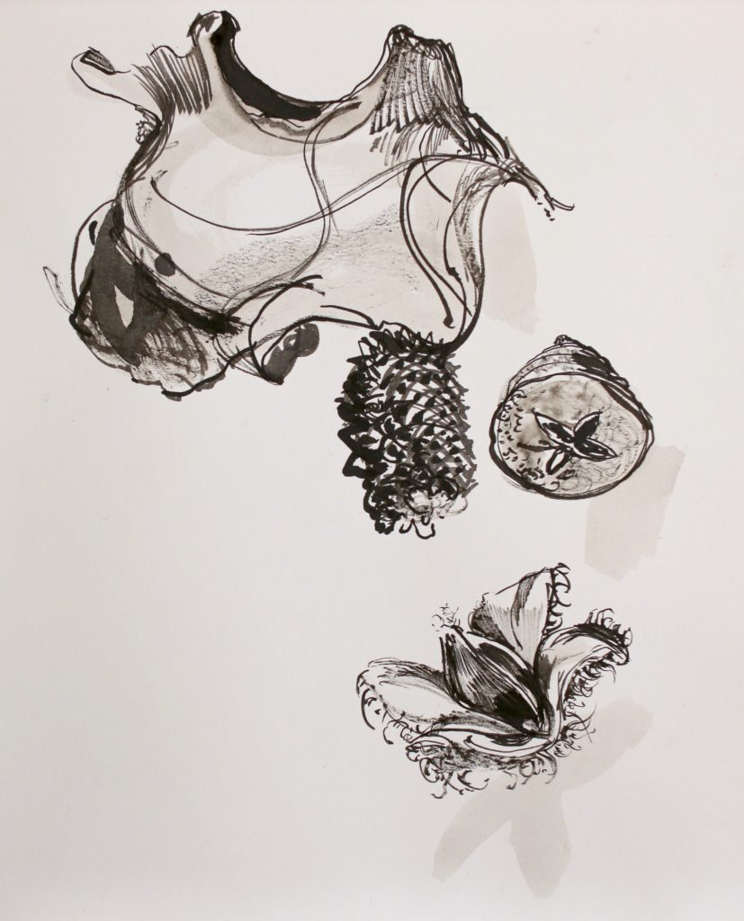 Ink drawing of beech nut, eucalyptus seed head and other seeds