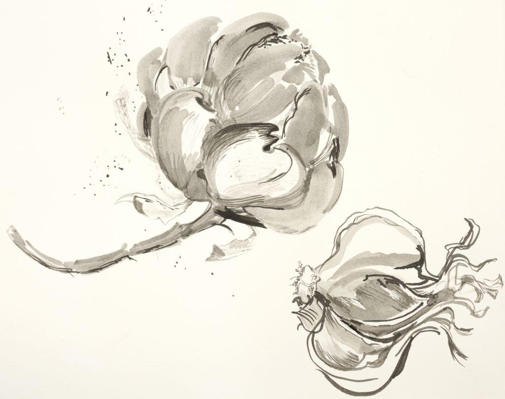 Ink drawing of artichoke head and garlic bulb